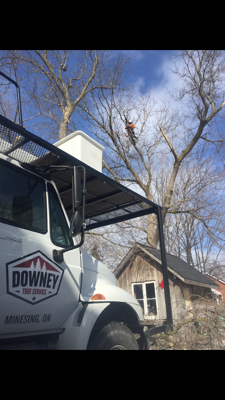 Tree Pruning Barrie