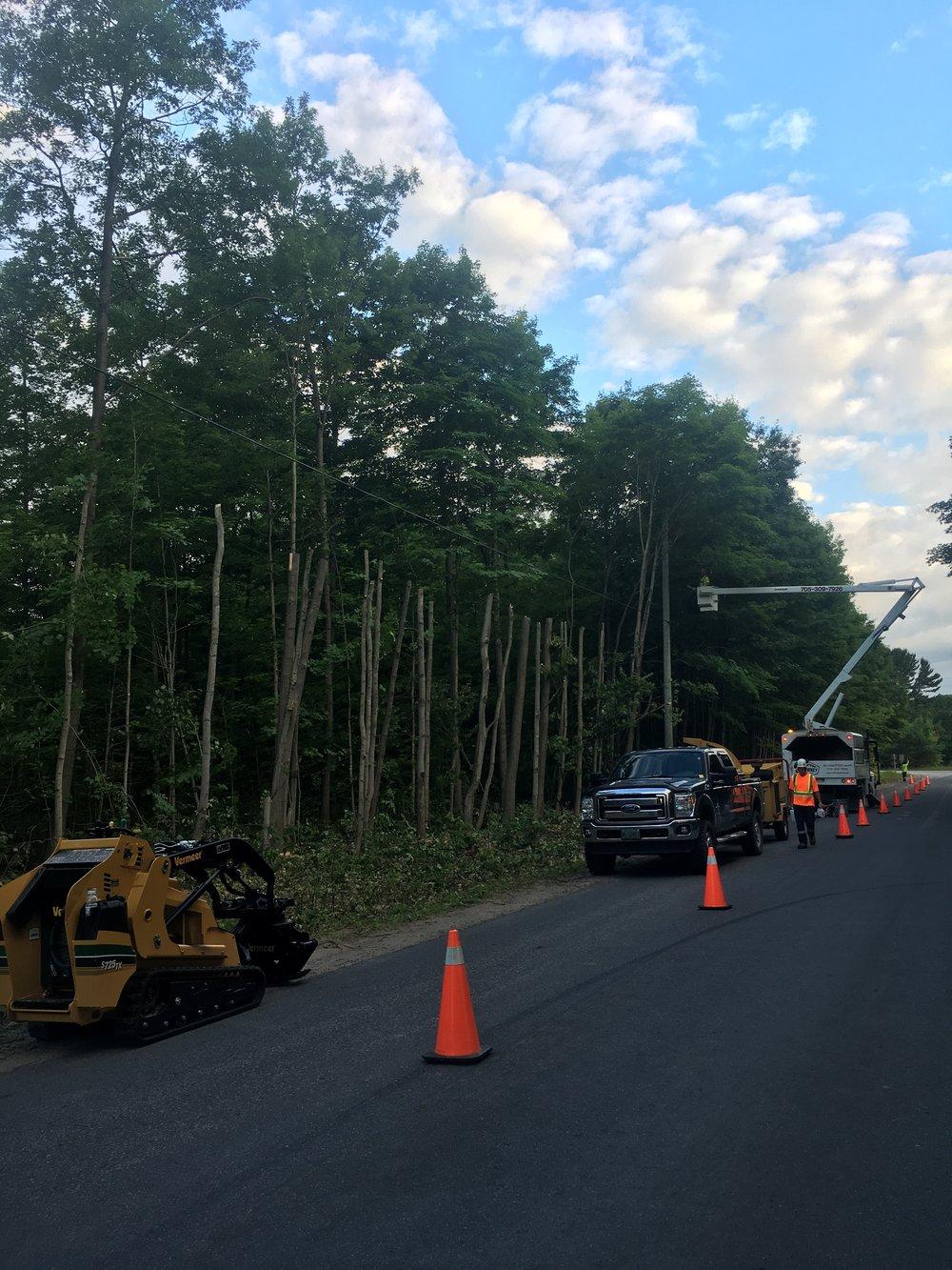 Tree Removal Simcoe County