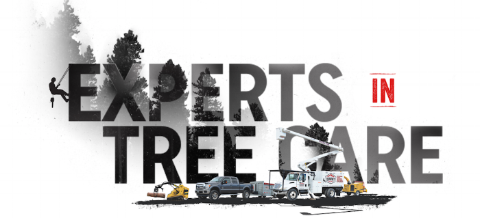 Barrie's Tree Experts