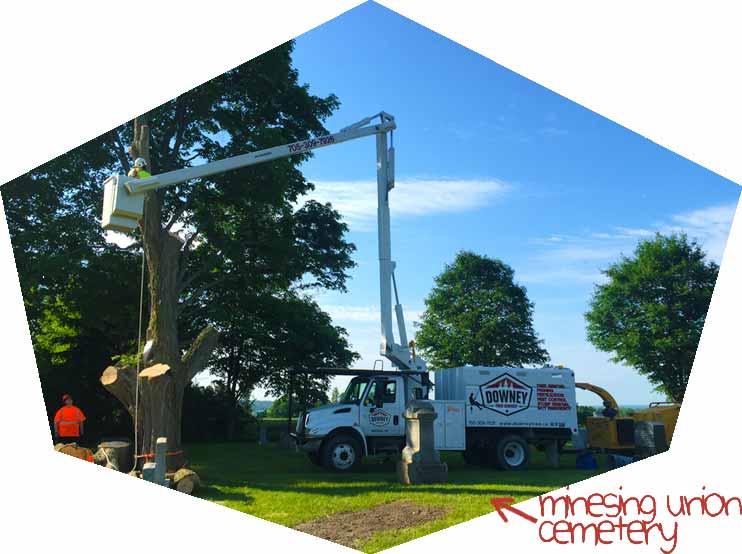 Tree-removal-Minesing-Ontario