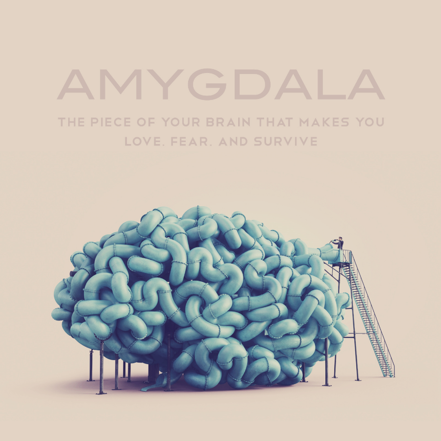 First Prize, Amygdala Magazine short story competition