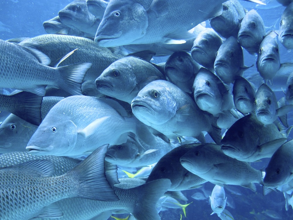 Fish in Atlantis.jpg