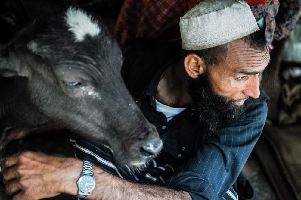 Dhumman huddles under the tarp with a buffalo calf during a storm