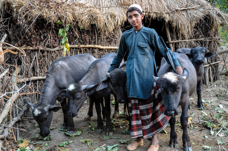 Sharafat, with buffalo calves