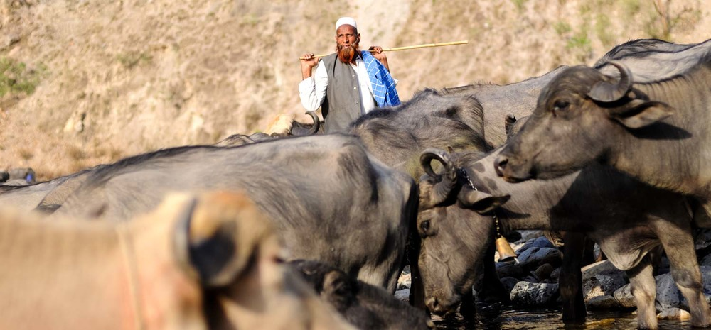 Yusuf watches the herd at Agaladapul.