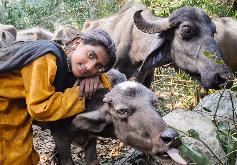 Bashi , with a calf, in the Dunda Mandal Hills