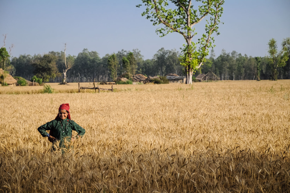 A Van Gujjar girl who now lives in the settlement of Gandikhatta - with wheat fields instead of jungle lands.