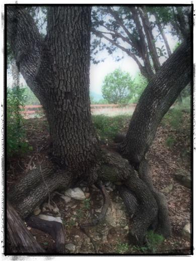 strong tree.jpg.jpg