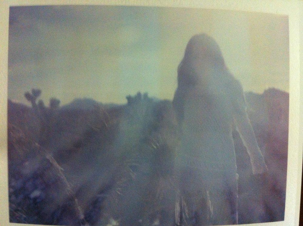 photograph by Danielle DeBruno <3
