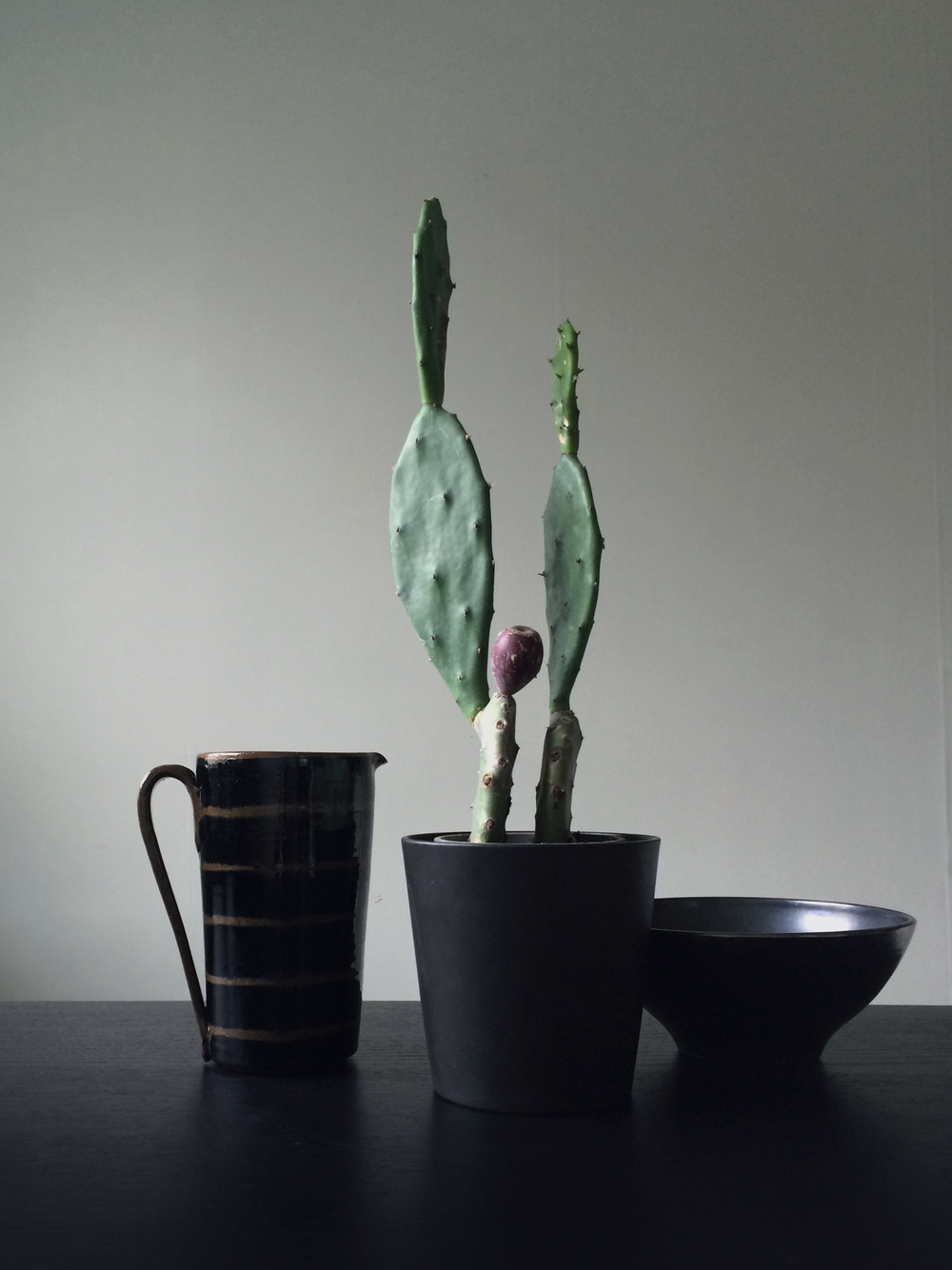 kaktus1.png