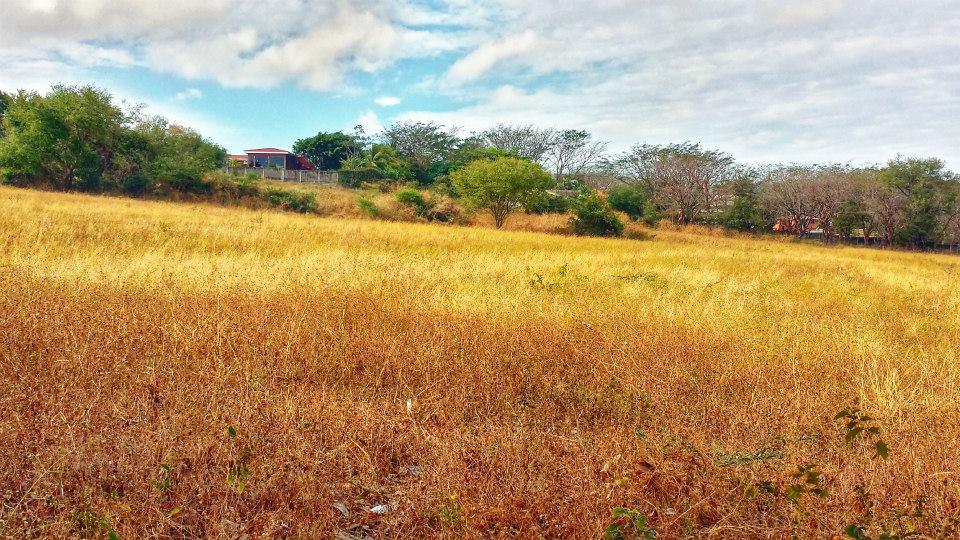 Managua Field Landscape.jpg