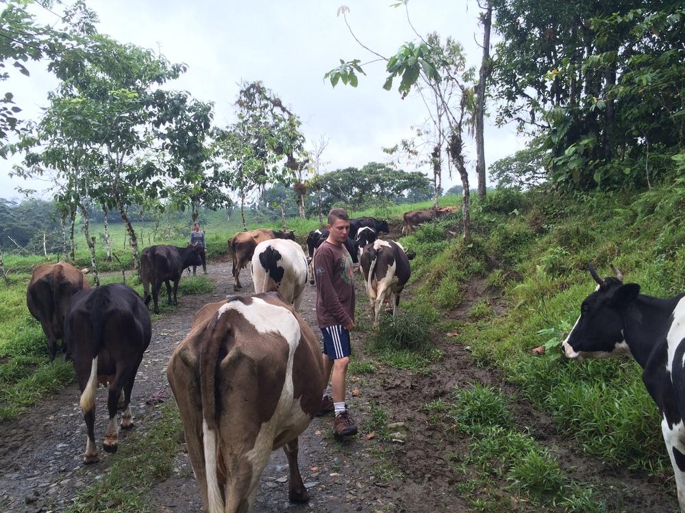 Program Director Everett herding some cattle