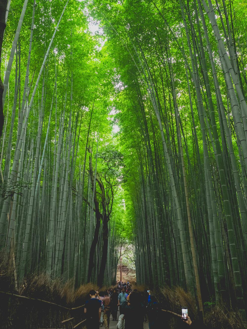 kyoto-snaps-137.jpg