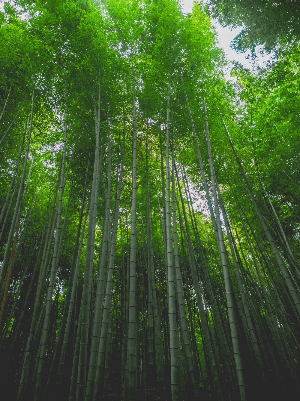 kyoto-snaps-136.jpg