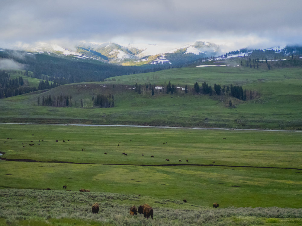 lamar valley.