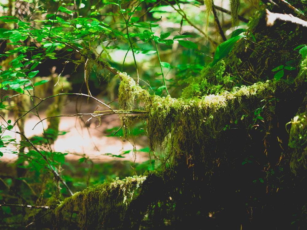 moss moss, everywhere.