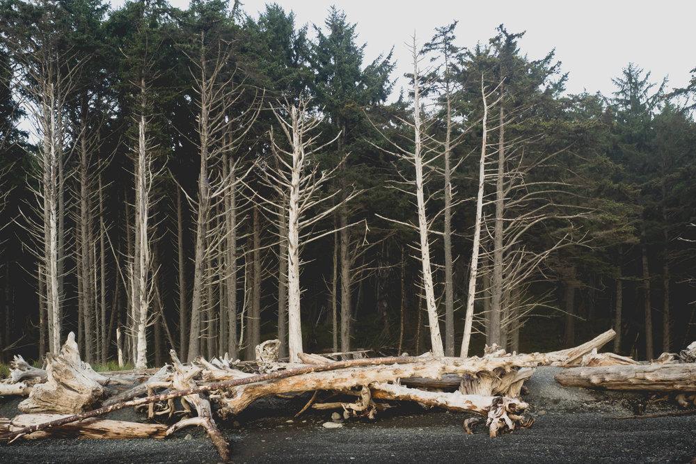 beach logs.