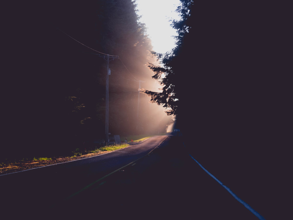 god rays on the road to rialto beach.