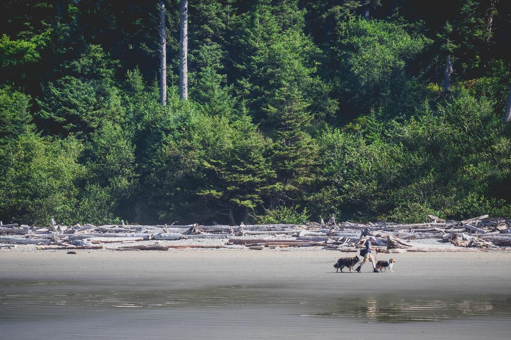 pups on the beach.