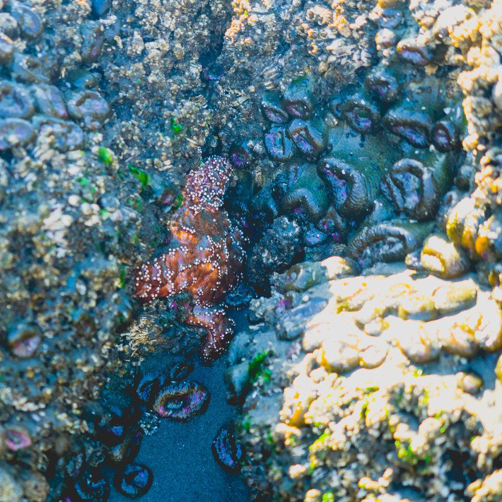 starfish and closed anemone.
