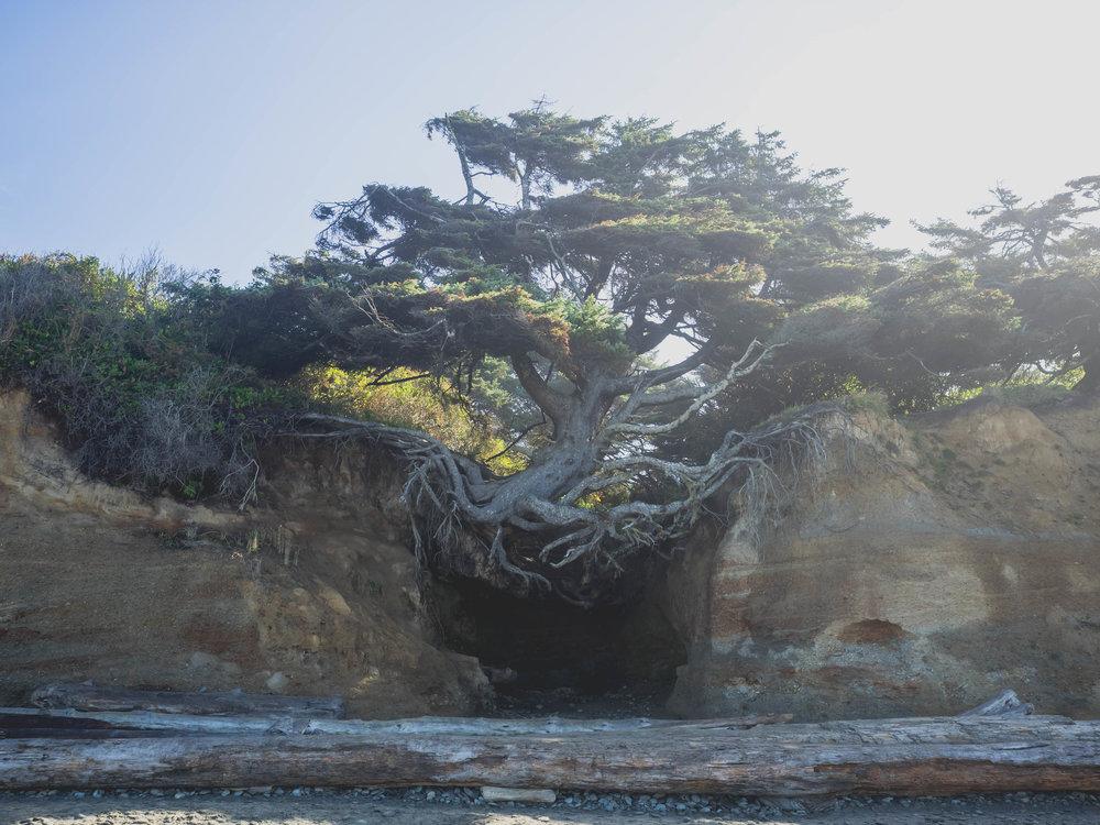 tree of life .