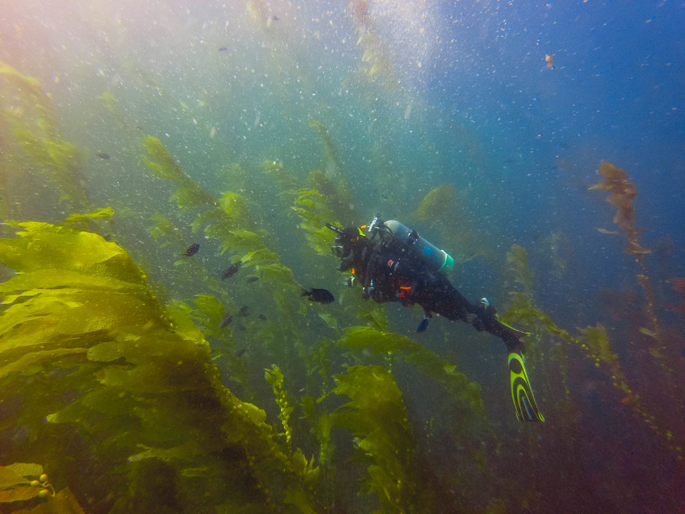 james in the kelp forest.