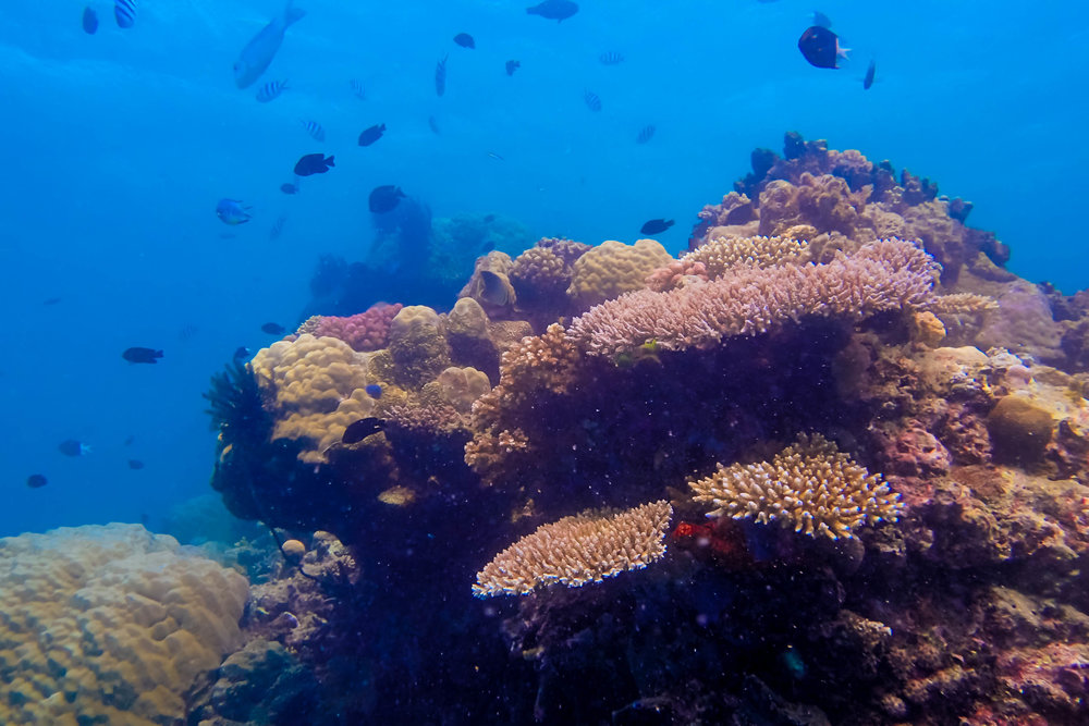 great-barrier-reef-diving-125.jpg