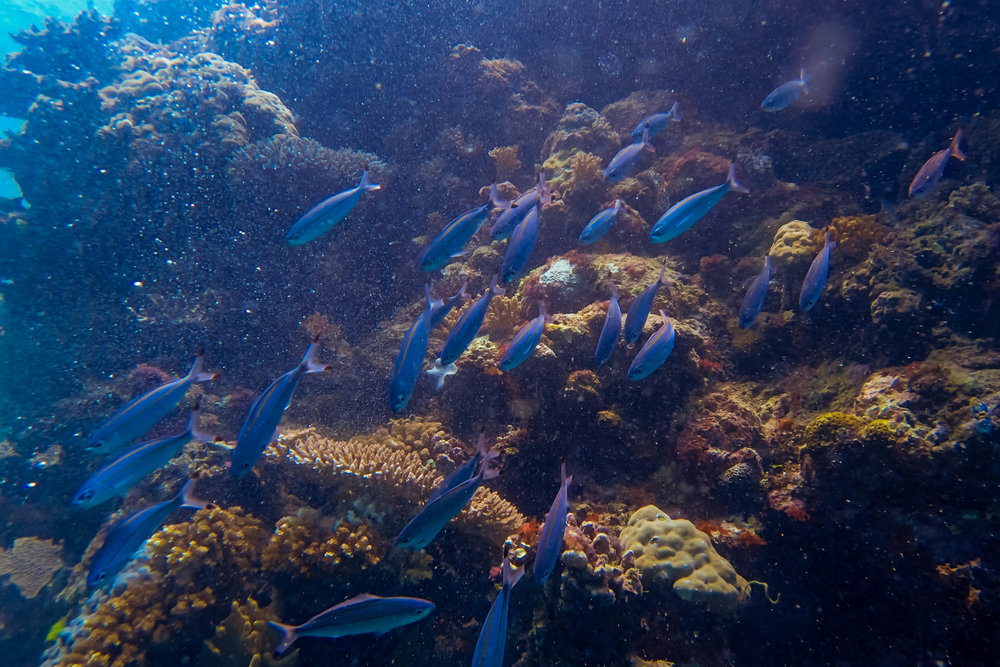 great-barrier-reef-diving-116.jpg