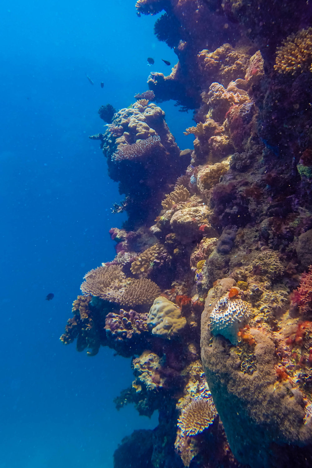 great-barrier-reef-diving-111.jpg