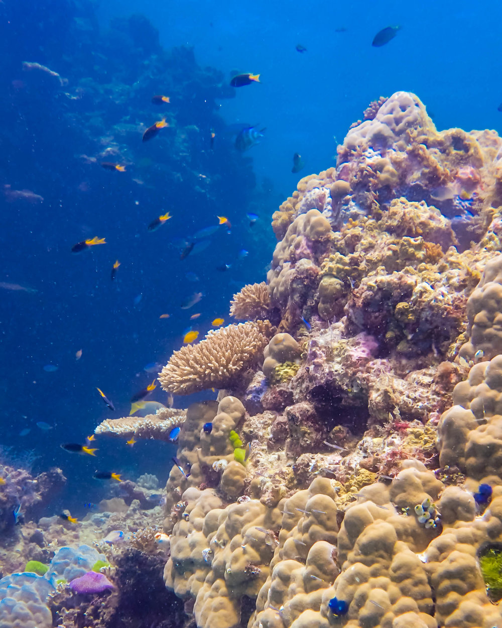 great-barrier-reef-diving-108.jpg
