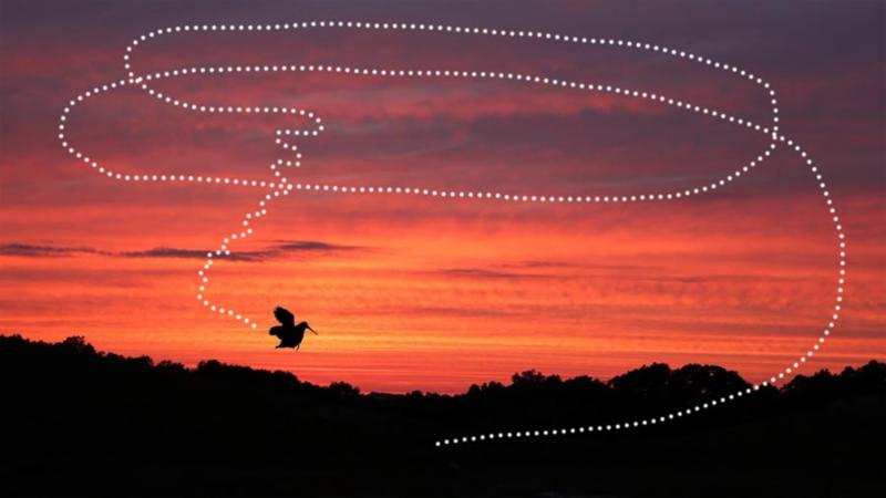 The flight pattern of the male woodcock's mating dance.