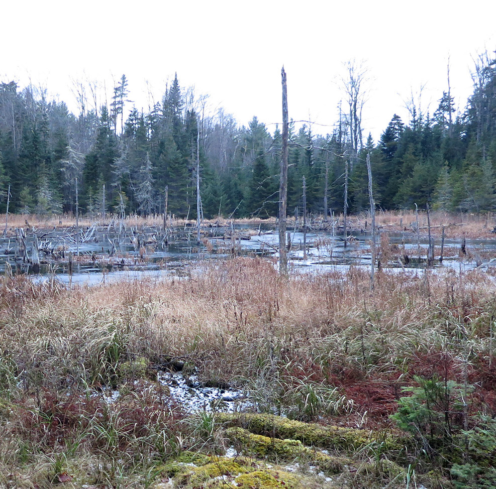 A remote beaver pond on the property, fall 2013.