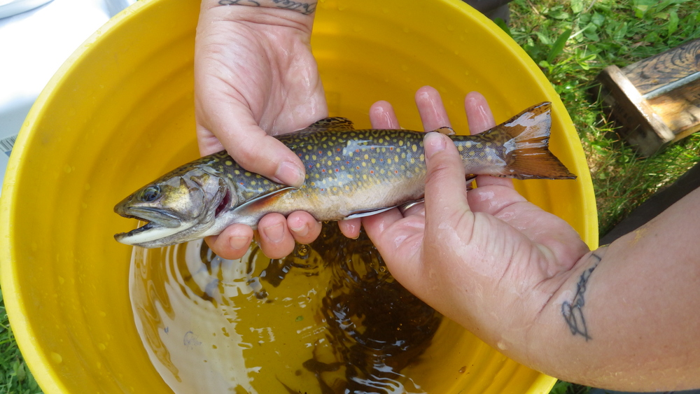 The Brebner property provides access for anglers to catch native brook trout in the Ammonoosuc River