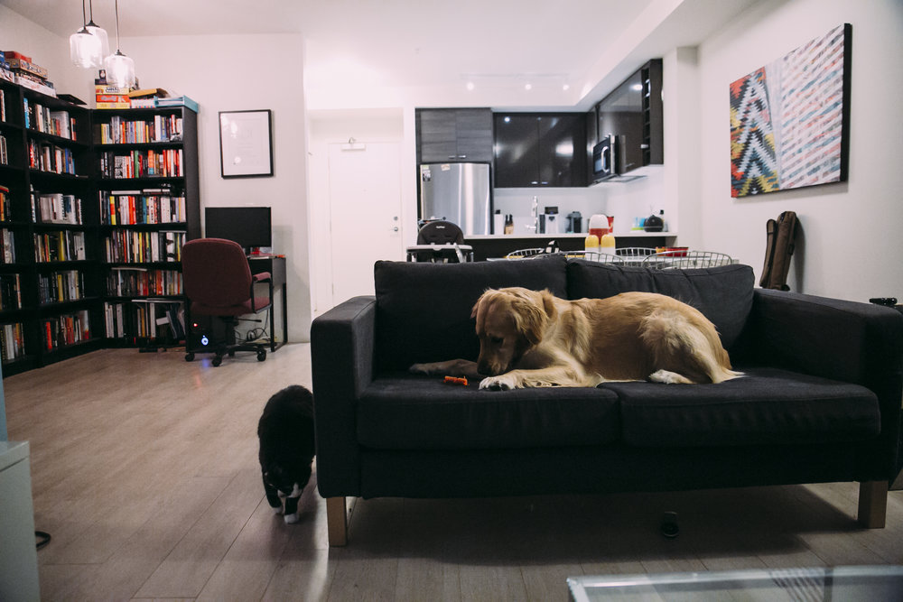 #documentary #family #inhome #lifestyle #reallife #candidmoments #motherhood #fatherhood #smallspaces #apartmentliving #dogs #goldenretriever #pets #vancouver #vancouverlifestyle #vancouverdocumentary #langley #indoors