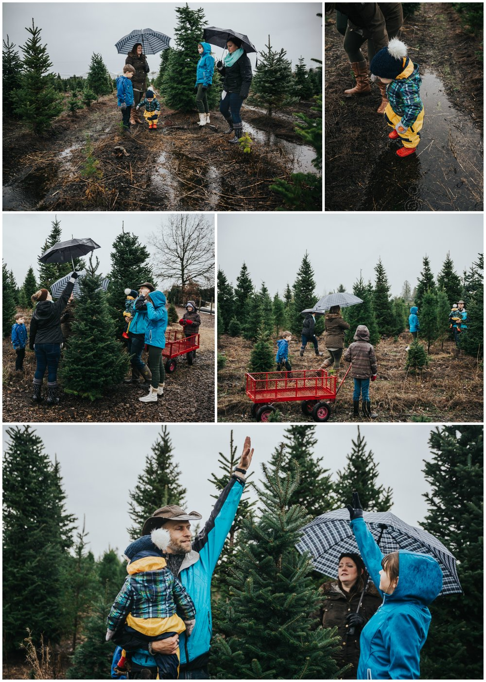 Is this the one? Christmas Tree Hunt Tradition at Oh Christmas Tree Farms in Langley, BC. Documentary Family Holiday Tradition, Real life moments with a family of 7 by Mimsical Photography. West Coast photographer in Lower Mainland, British Columbia