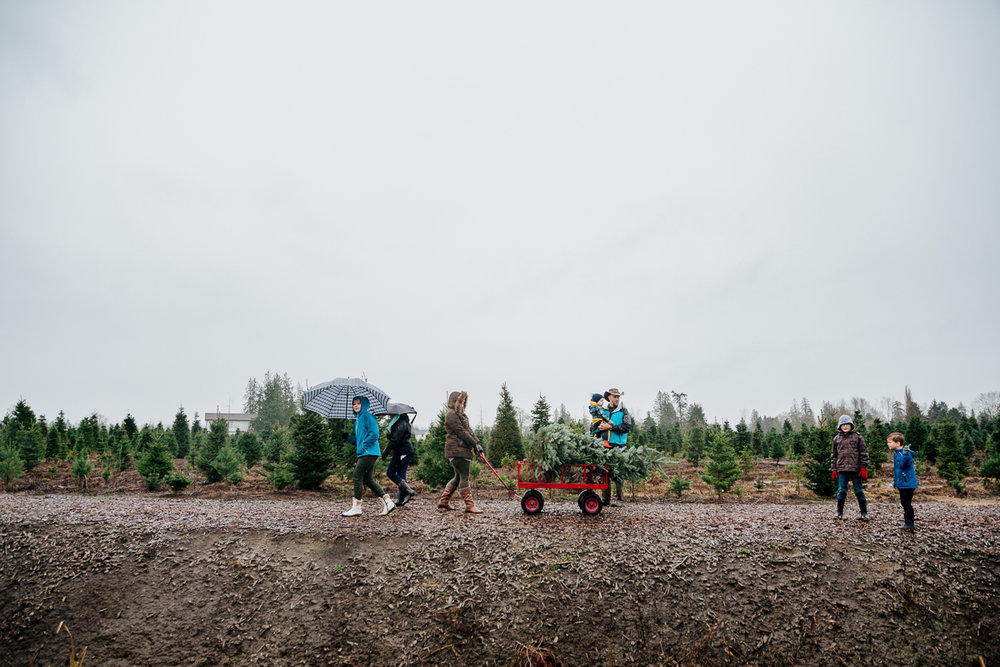 The long walk back  Christmas Tree Hunt Tradition at Oh Christmas Tree Farms in Langley, BC. Documentary Family Holiday Tradition, Real life moments with a family of 7 by Mimsical Photography. West Coast photographer in Lower Mainland, British Columbia