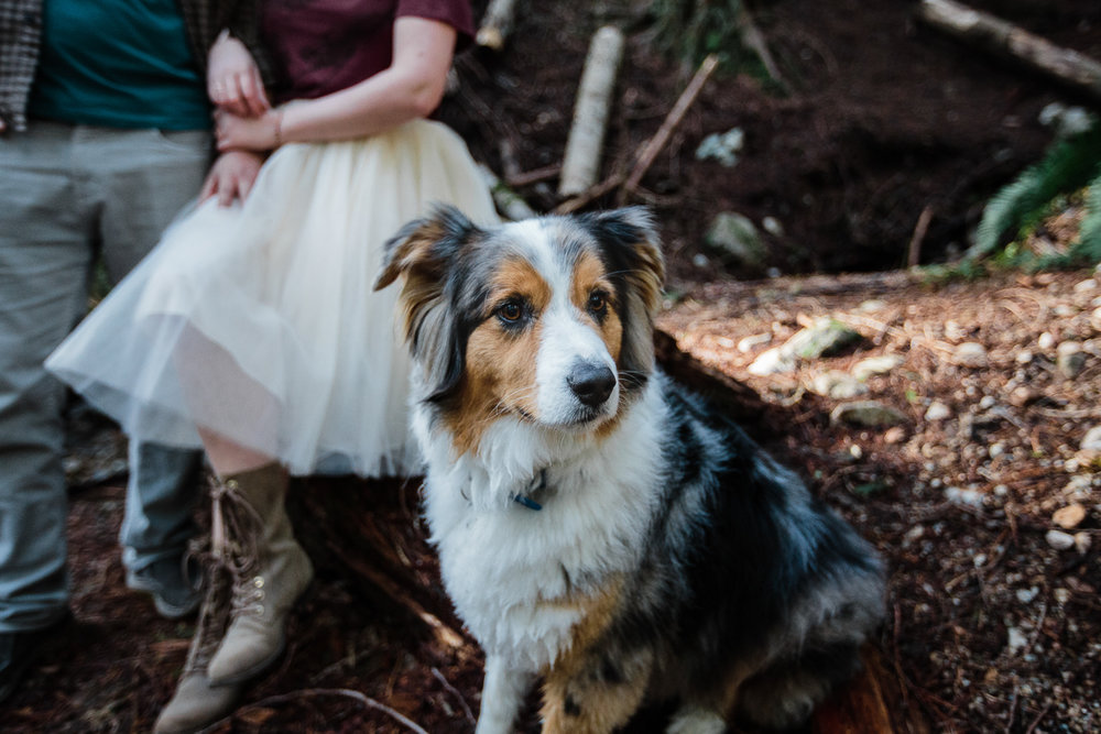 Dog portrait during their engagement photography session with Mimsical Photography in their backyard forest on the side of north vancouver mountain on a sunny day.