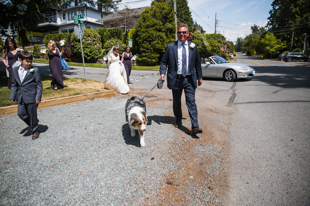 bridal party and bride and father of the bride walking australian shepherd dog down street before outdoor summer wedding at Kwomais Point Park in Ocean Park Surrey British Columbia by Mimsical Photography who is a wedding photographer from Langley, BC that has a candid and documentary fun style.