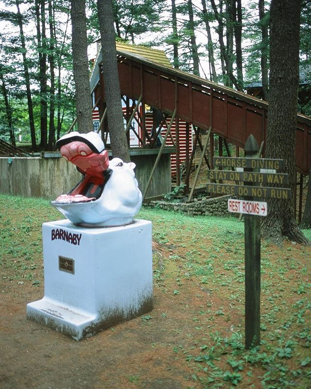 Magic Forest, Lake George,NY.  #35mm #35mmfilm #filmphotography #filmfeed #filmisnotdead #filmcamera #bleachmyfilm #buyfilmnotmegapixels #fujifilm #newyork #photooftheday #canon