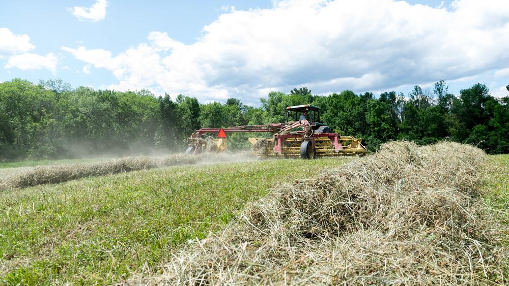 haying-3.jpg