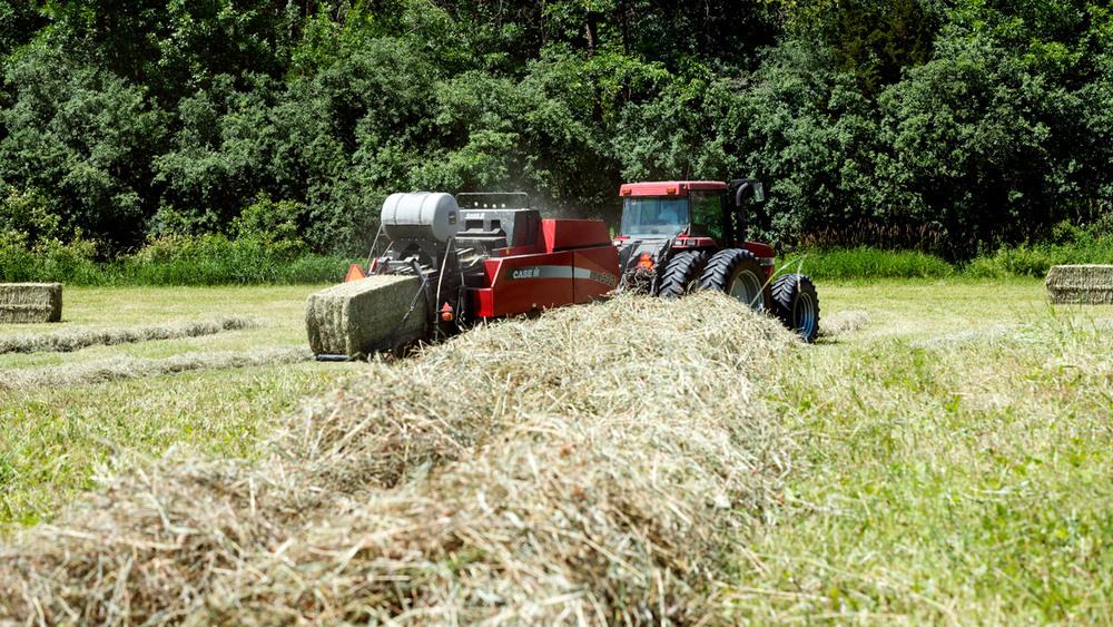 haying-7.jpg