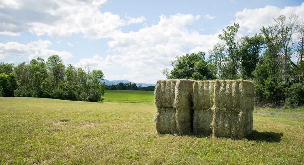 haying-1.jpg