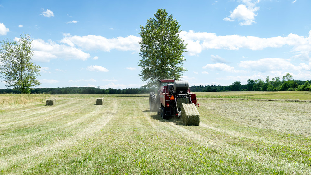 haying-4.jpg