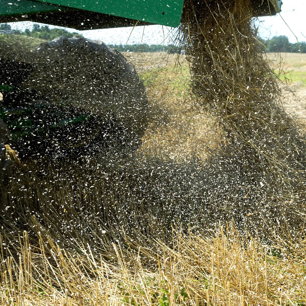 wheat-harvesting-30.jpg