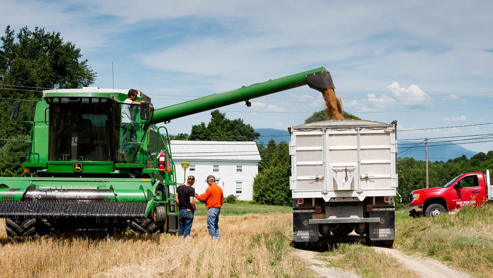 wheat-harvesting-6.jpg
