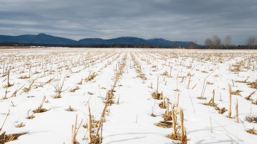 SHF-corn-winter-view-Feb-17-15.jpg