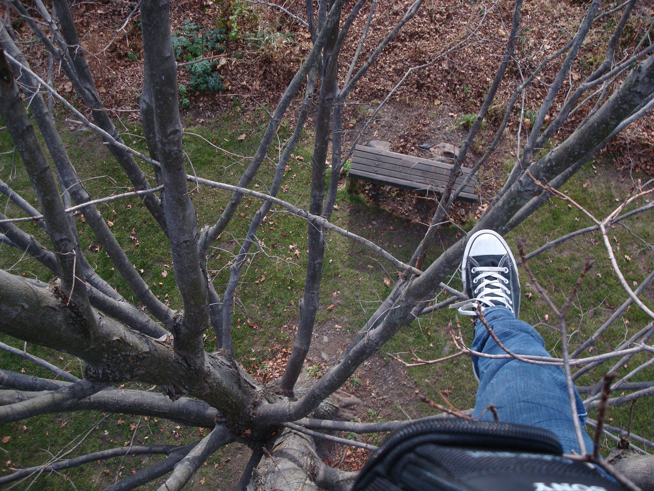 the view from (almost) the top of a tree, looking down at a bench.