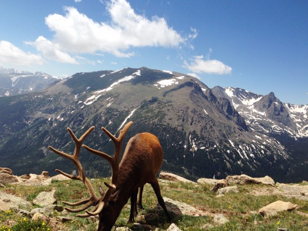 Far and away THE photo of the trip. An elk just outside of our car in Rocky Mountain NP.