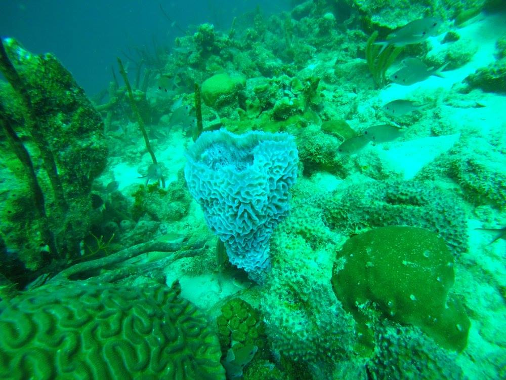 coral10.jpg