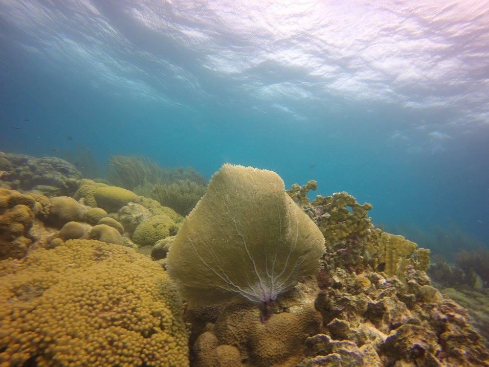 coral17.jpg